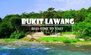 Info mengenai Tempat Wisata Bukit Lawang Langkat dan Sejarahnya