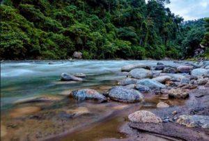 Info tentang paket wisata Bukit Lawang yang menarik